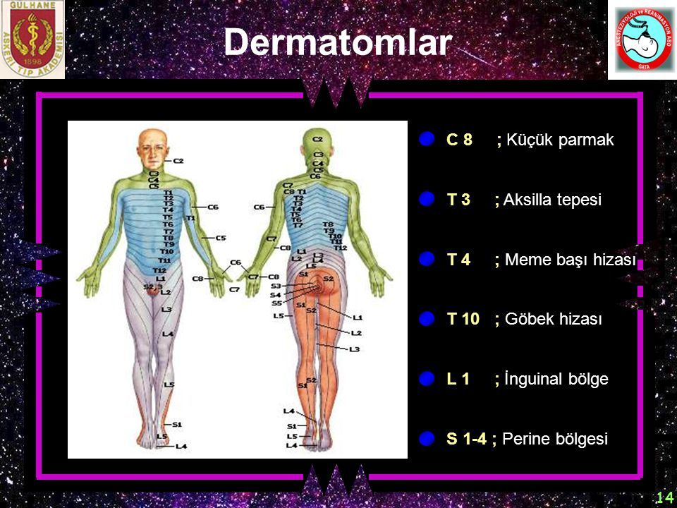 Dermatomlar C 8 ; Küçük parmak T 3 ; Aksilla tepesi