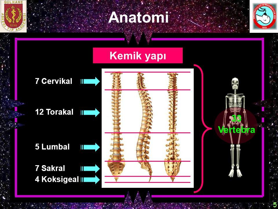 Anatomi Kemik yapı 33 Vertebra 7 Cervikal 12 Torakal 5 Lumbal 7 Sakral