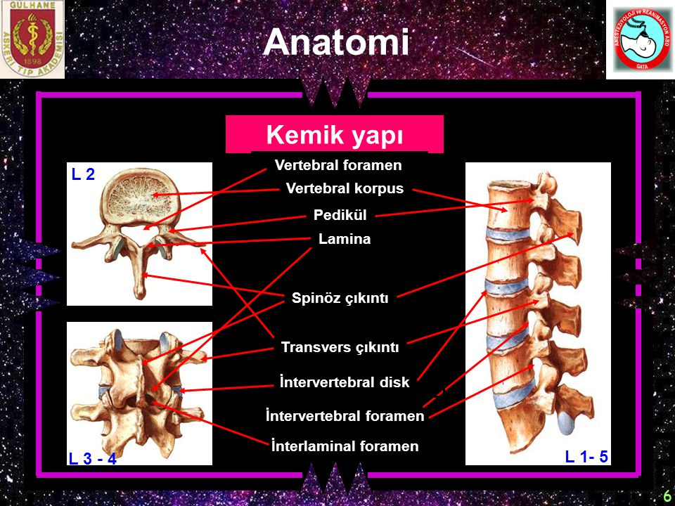 İntervertebral foramen