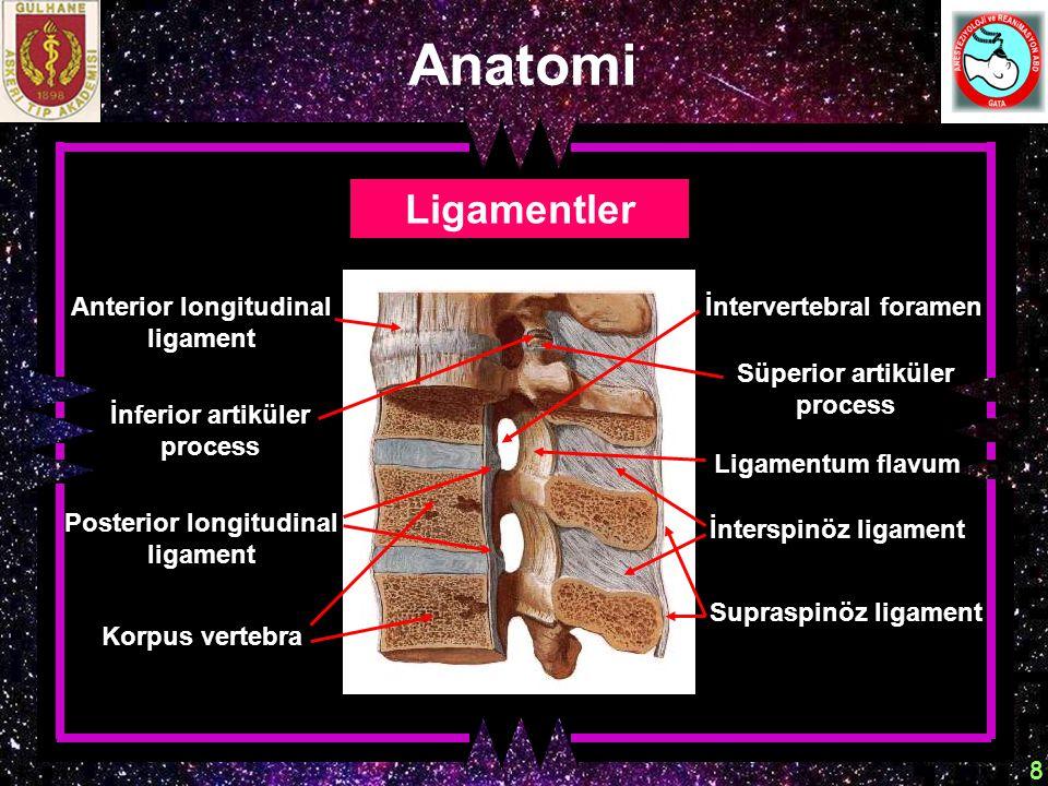 Anatomi Ligamentler Anterior longitudinal ligament