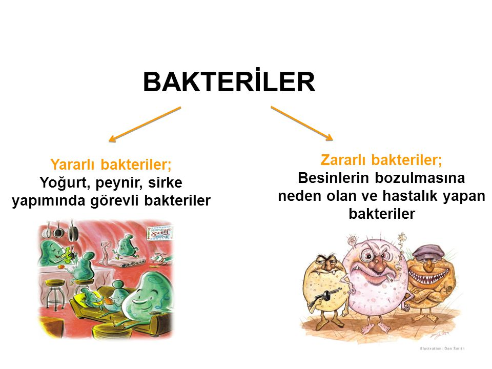 BAKTERİLER Zararlı bakteriler; Yararlı bakteriler;