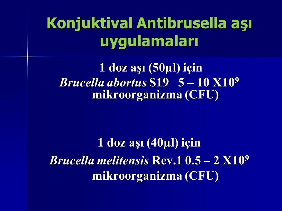 Konjuktival Antibrusella aşı uygulamaları