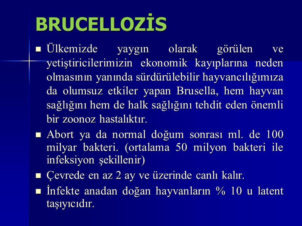 BRUCELLOZİS