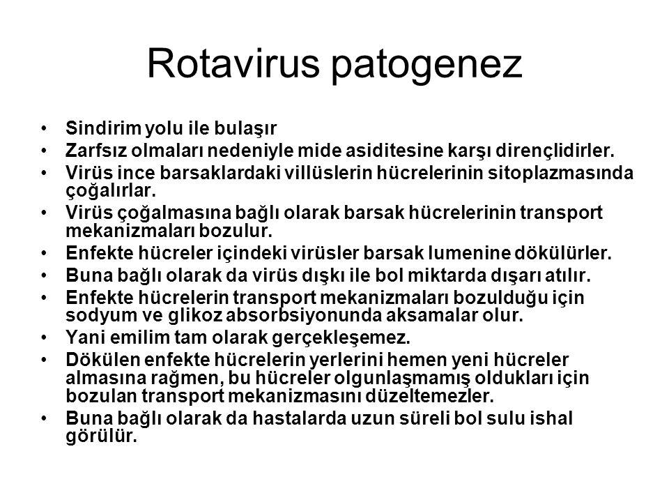 Rotavirus patogenez Sindirim yolu ile bulaşır