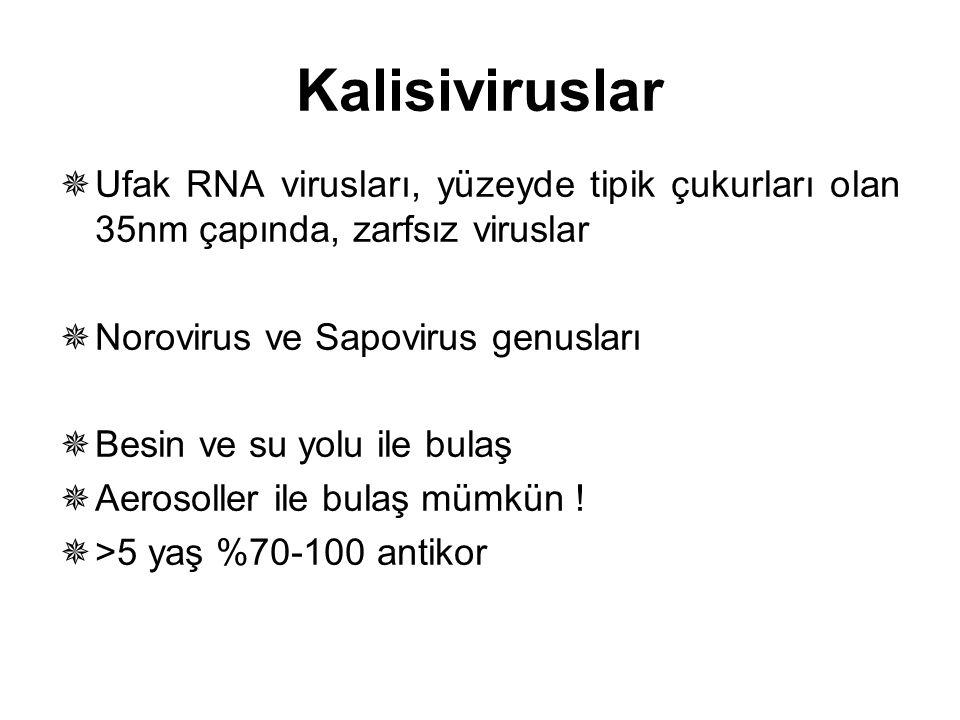Kalisiviruslar Ufak RNA virusları, yüzeyde tipik çukurları olan 35nm çapında, zarfsız viruslar. Norovirus ve Sapovirus genusları.