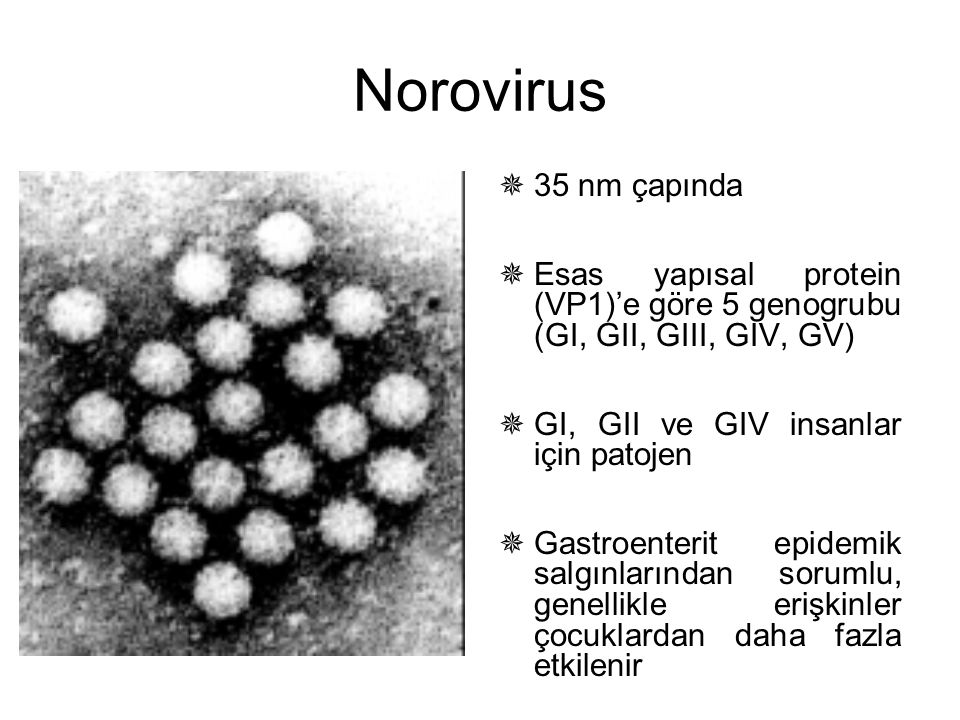 Norovirus 35 nm çapında. Esas yapısal protein (VP1)'e göre 5 genogrubu (GI, GII, GIII, GIV, GV) GI, GII ve GIV insanlar için patojen.