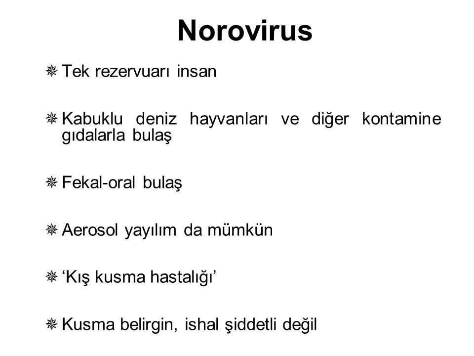 Norovirus Tek rezervuarı insan
