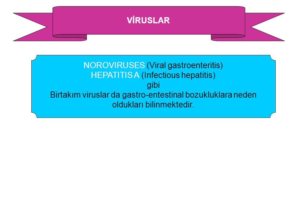 NOROVIRUSES (Viral gastroenteritis) HEPATITIS A (Infectious hepatitis)