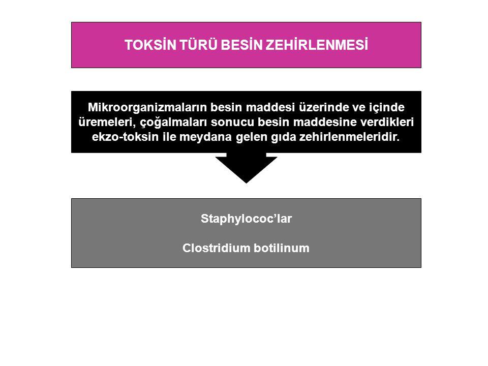 TOKSİN TÜRÜ BESİN ZEHİRLENMESİ Clostridium botilinum