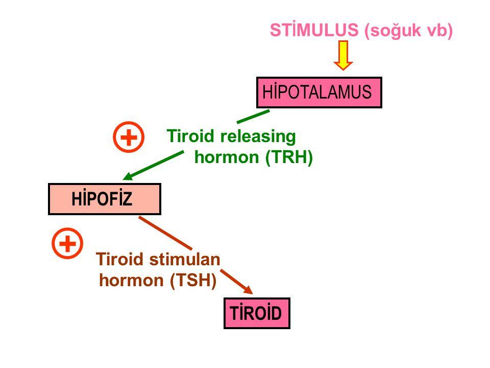 Tiroid stimulan hormon (TSH)
