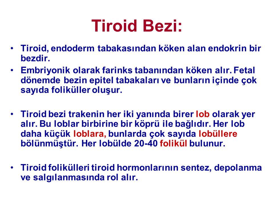 Tiroid Bezi: Tiroid, endoderm tabakasından köken alan endokrin bir bezdir.