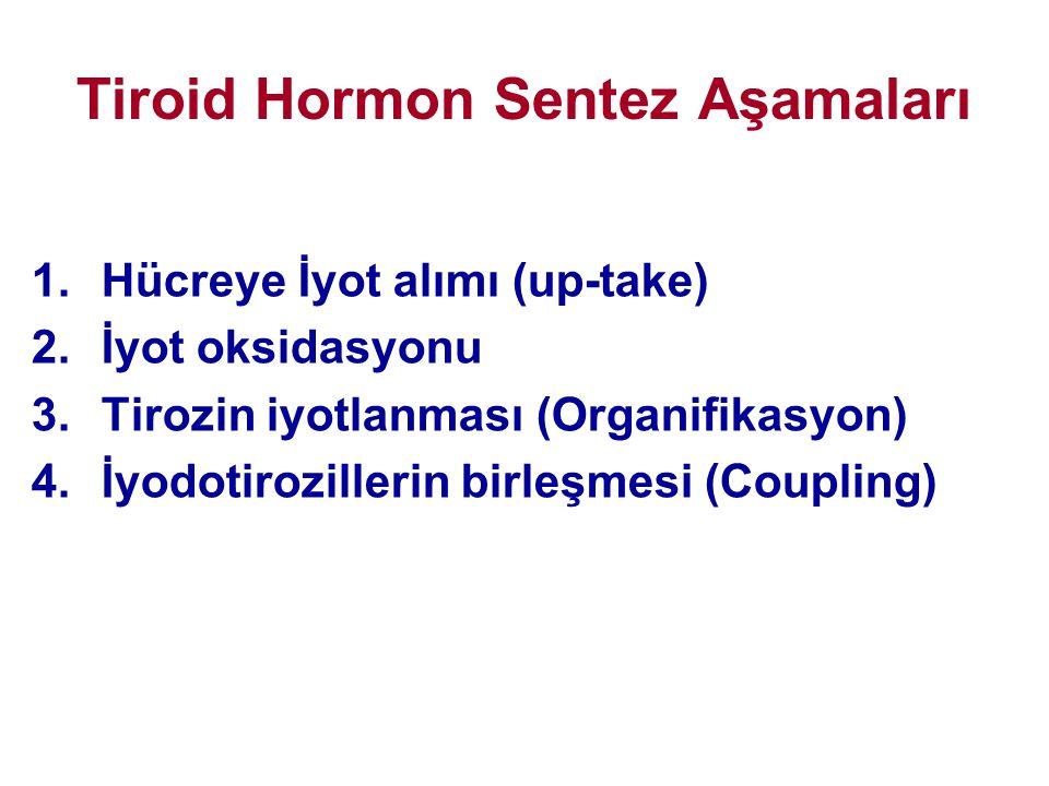 Tiroid Hormon Sentez Aşamaları