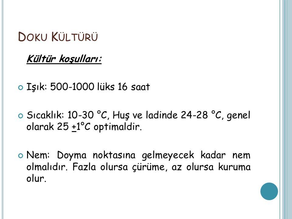 Doku Kültürü Kültür koşulları: Işık: 500-1000 lüks 16 saat