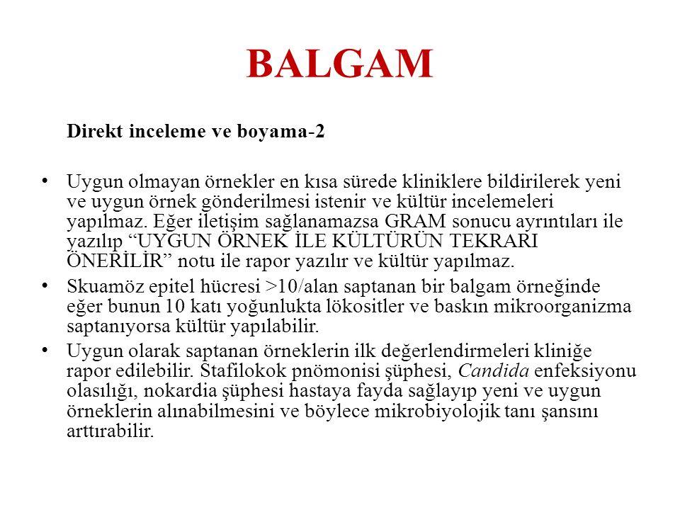 BALGAM Direkt inceleme ve boyama-2