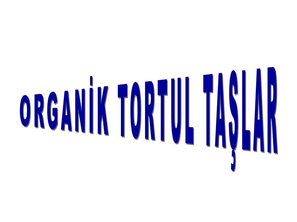ORGANİK TORTUL TAŞLAR