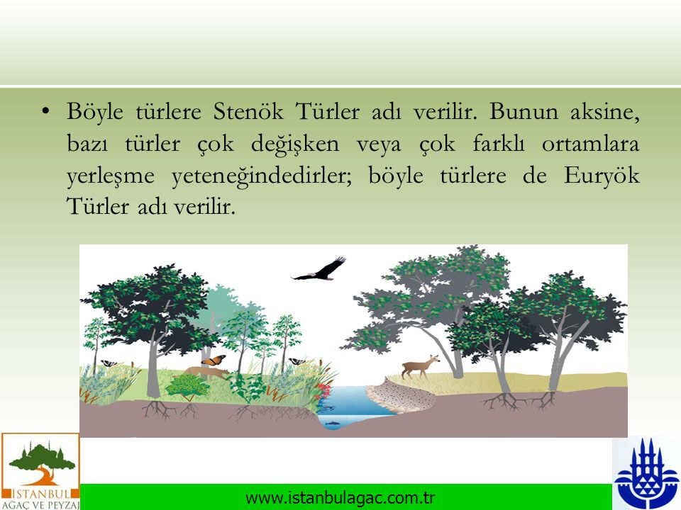 Böyle türlere Stenök Türler adı verilir