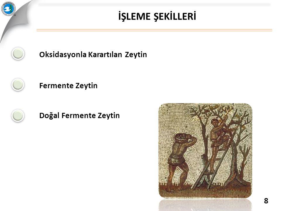 İŞLEME ŞEKİLLERİ Oksidasyonla Karartılan Zeytin Fermente Zeytin