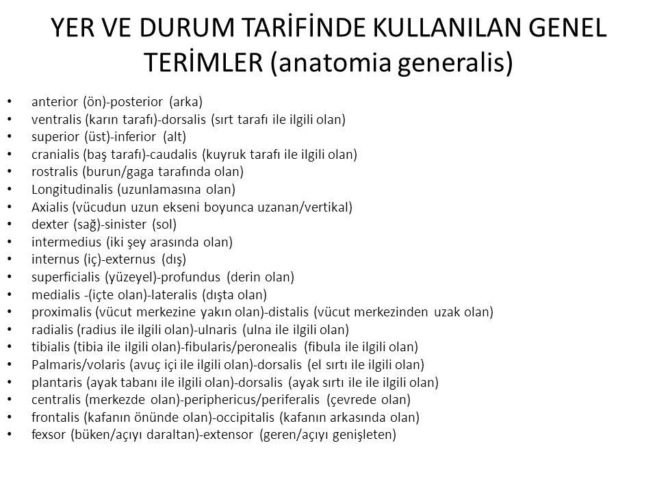YER VE DURUM TARİFİNDE KULLANILAN GENEL TERİMLER (anatomia generalis)