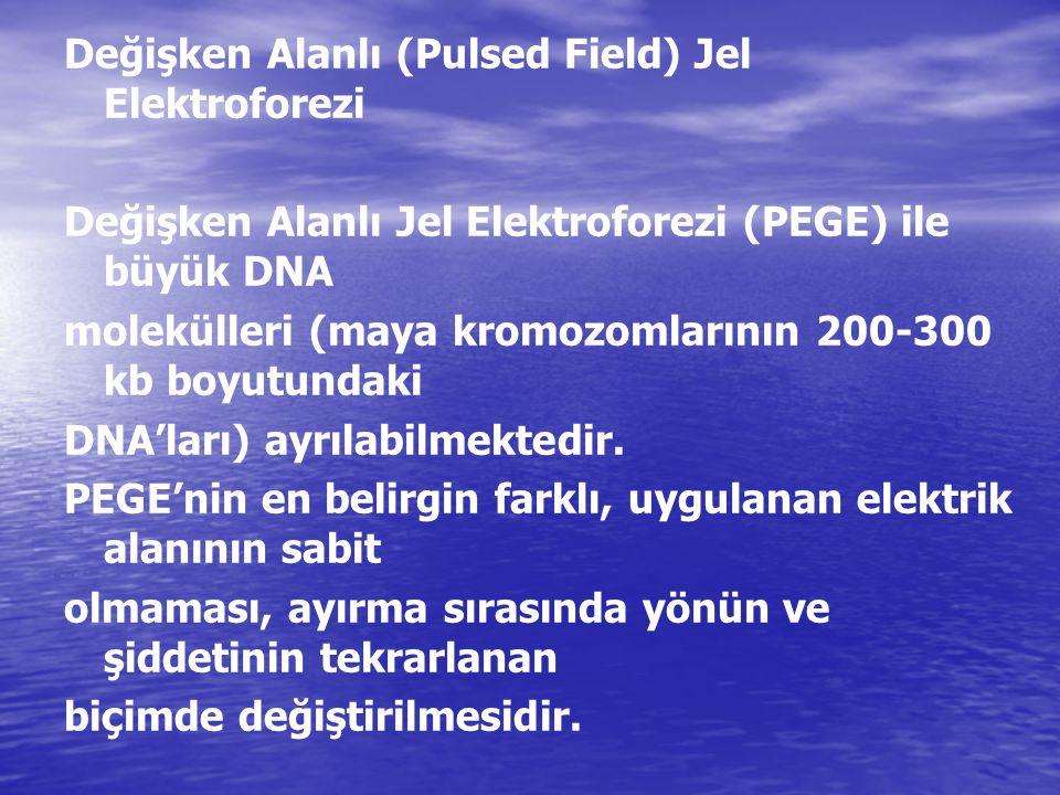 Değişken Alanlı (Pulsed Field) Jel Elektroforezi