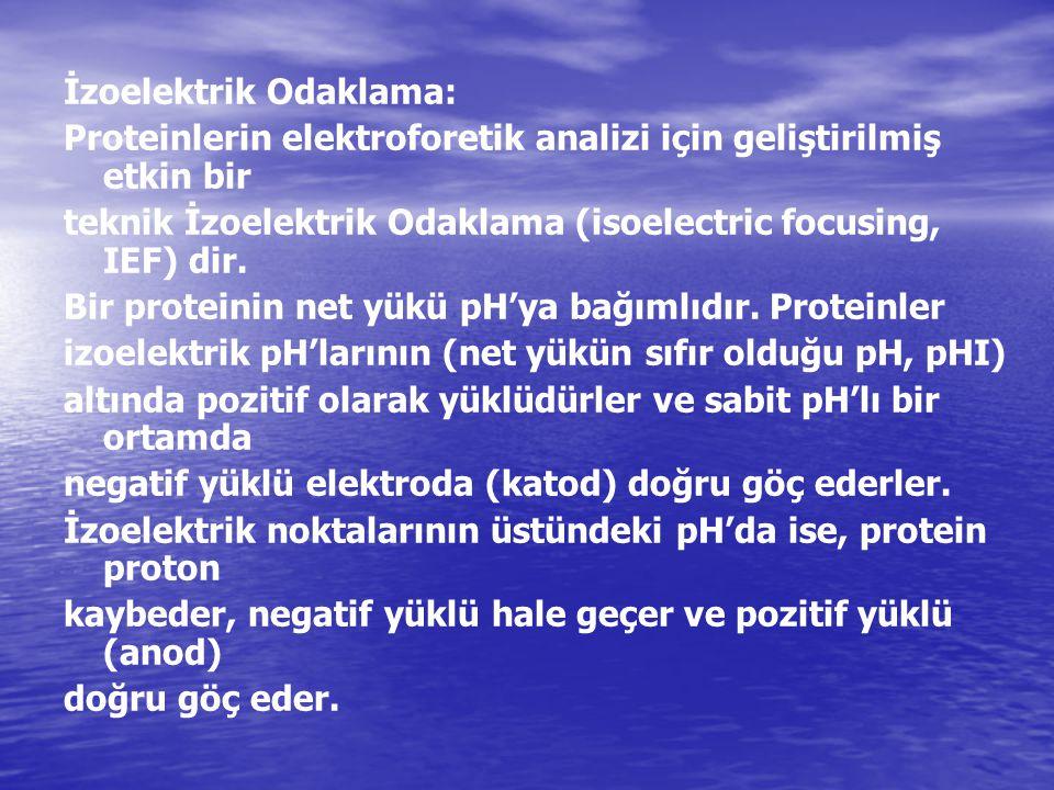 İzoelektrik Odaklama: