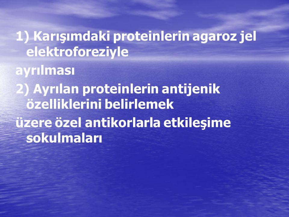 1) Karışımdaki proteinlerin agaroz jel elektroforeziyle