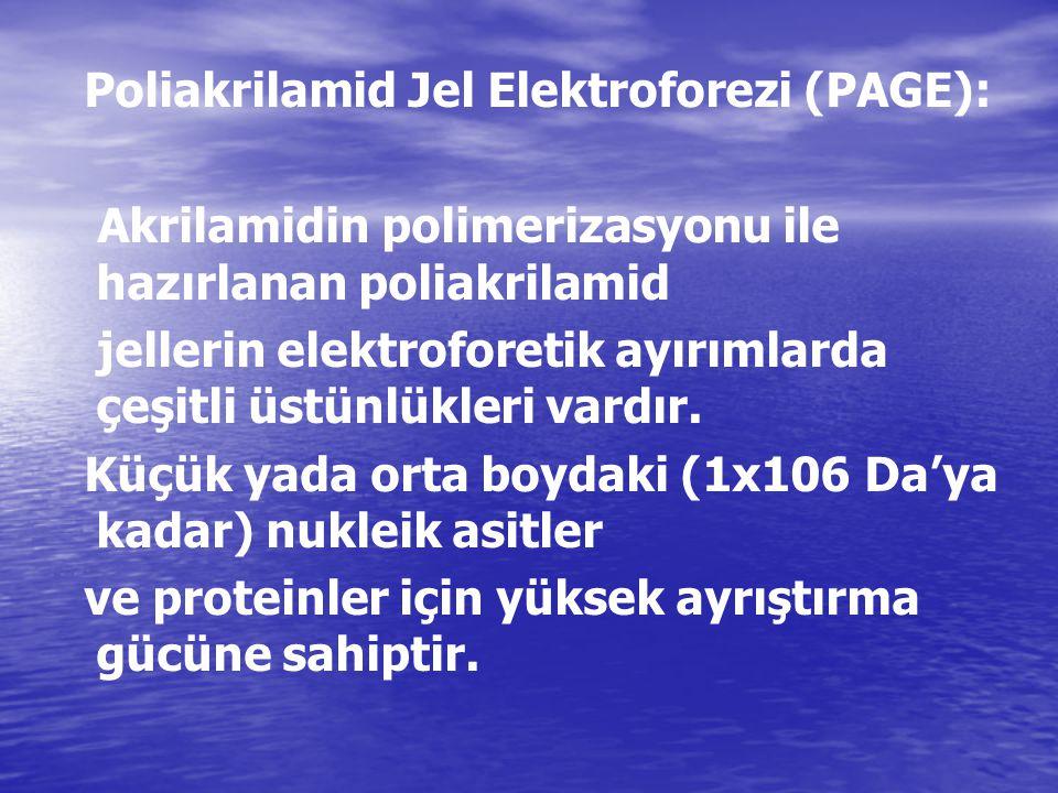 Poliakrilamid Jel Elektroforezi (PAGE):