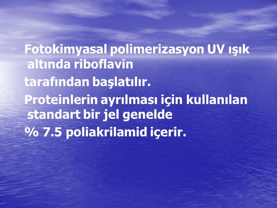 Fotokimyasal polimerizasyon UV ışık altında riboflavin