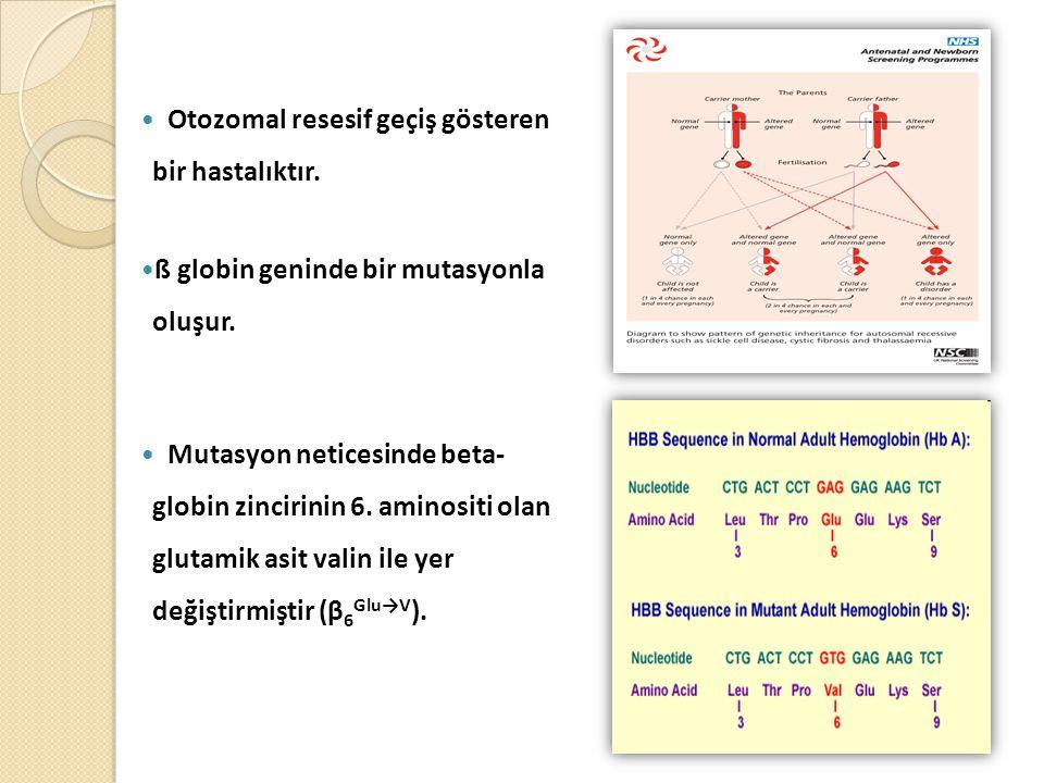 Otozomal resesif geçiş gösteren bir hastalıktır.