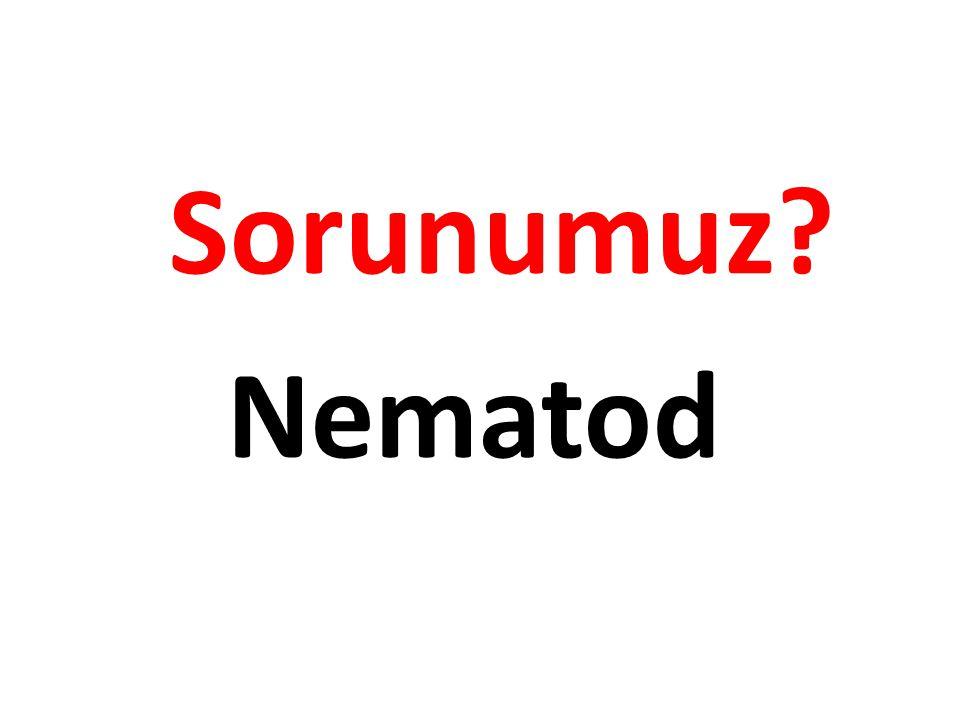 Sorunumuz Nematod