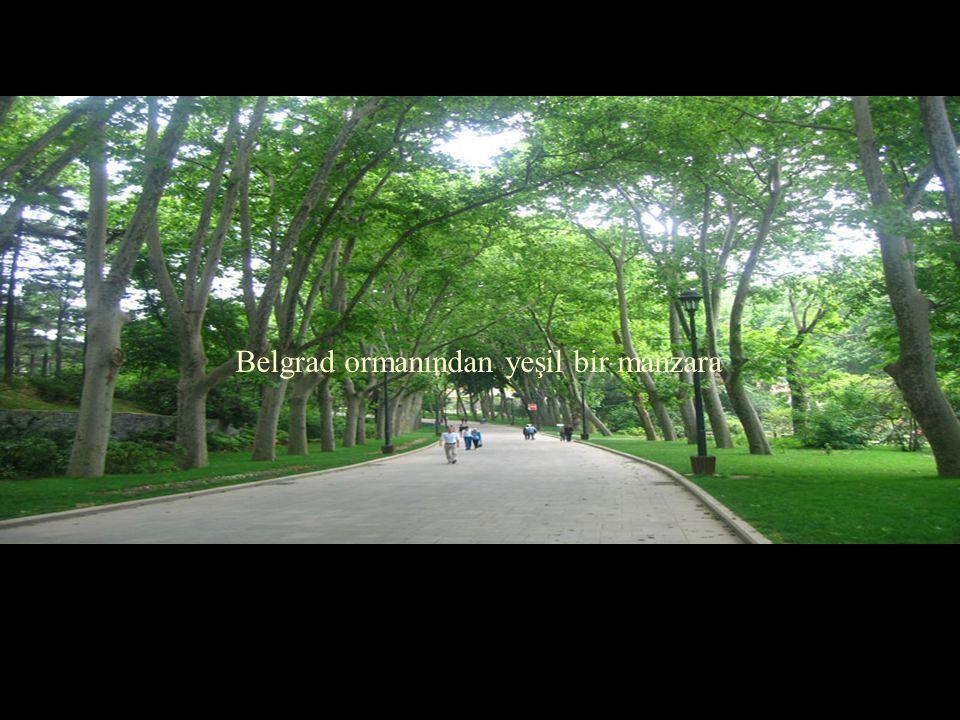 Belgrad ormanından yeşil bir manzara