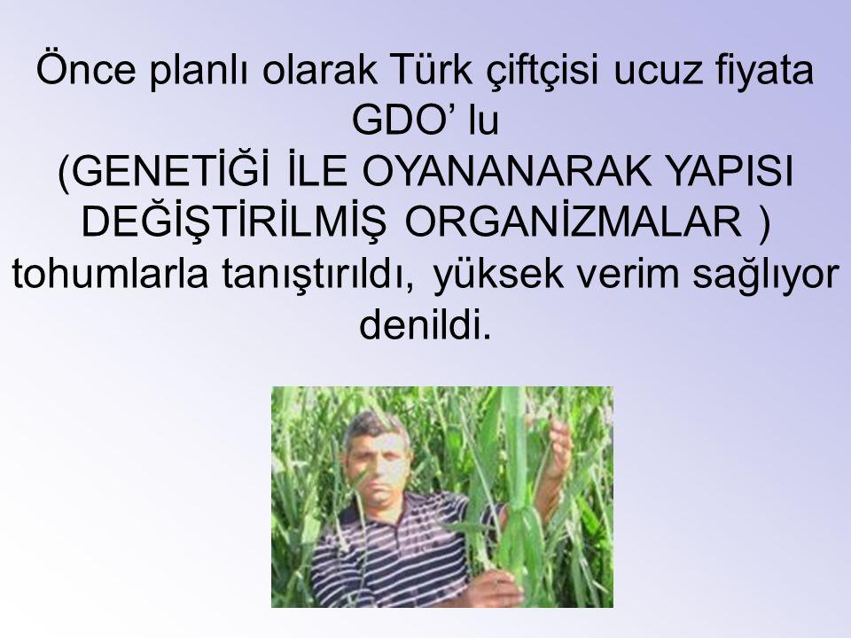 Önce planlı olarak Türk çiftçisi ucuz fiyata GDO' lu