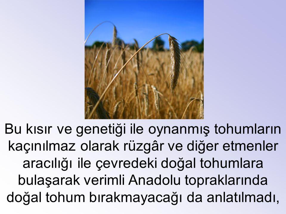 Bu kısır ve genetiği ile oynanmış tohumların kaçınılmaz olarak rüzgâr ve diğer etmenler aracılığı ile çevredeki doğal tohumlara bulaşarak verimli Anadolu topraklarında doğal tohum bırakmayacağı da anlatılmadı,