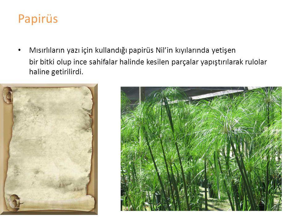 Papirüs Mısırlıların yazı için kullandığı papirüs Nil'in kıyılarında yetişen.