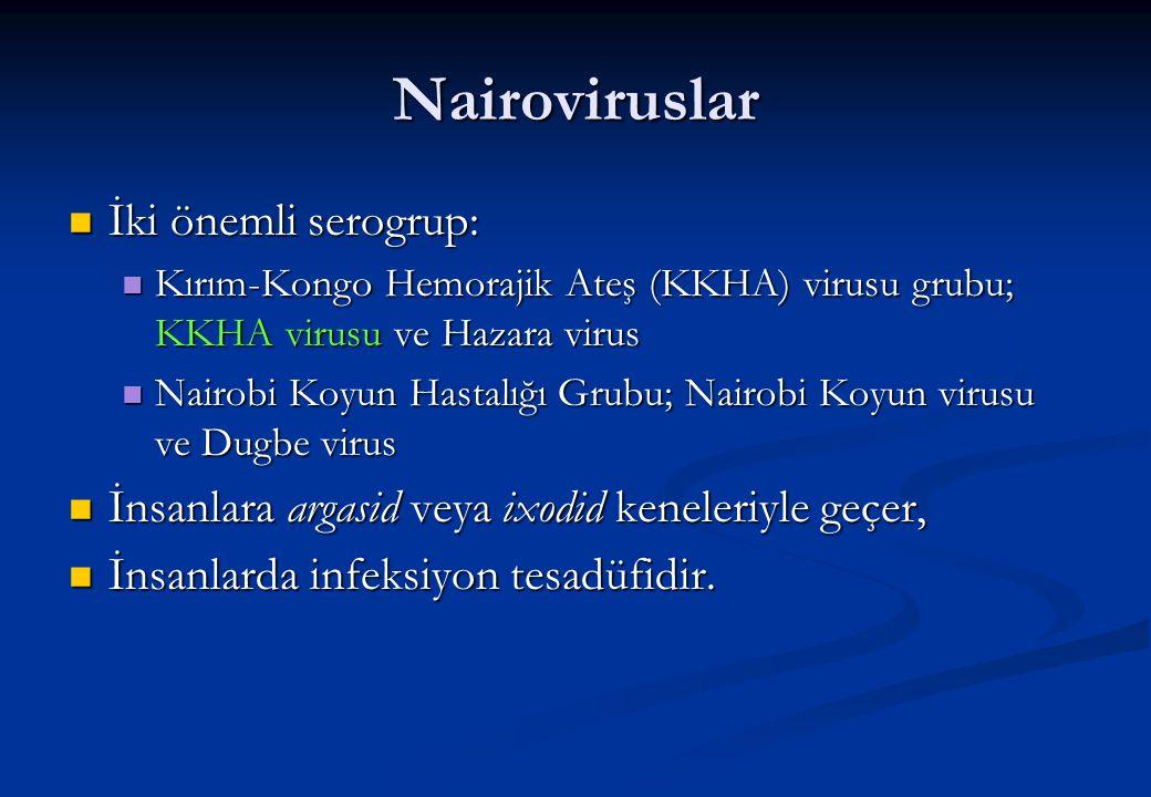 Nairoviruslar İki önemli serogrup: