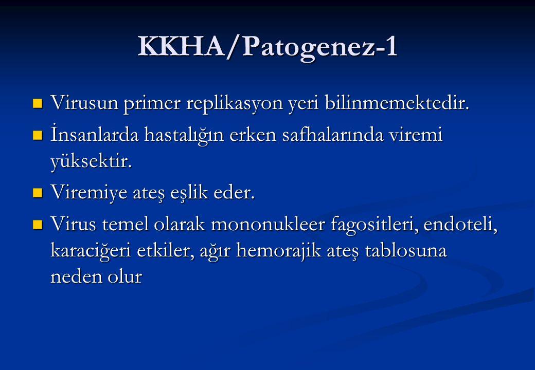 KKHA/Patogenez-1 Virusun primer replikasyon yeri bilinmemektedir.