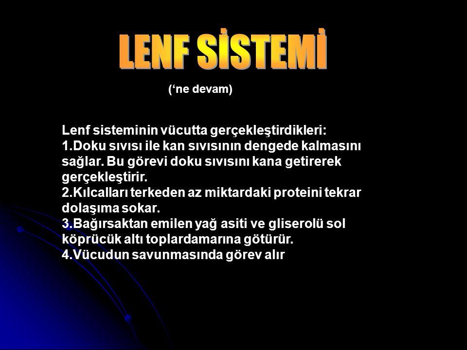 LENF SİSTEMİ Lenf sisteminin vücutta gerçekleştirdikleri: