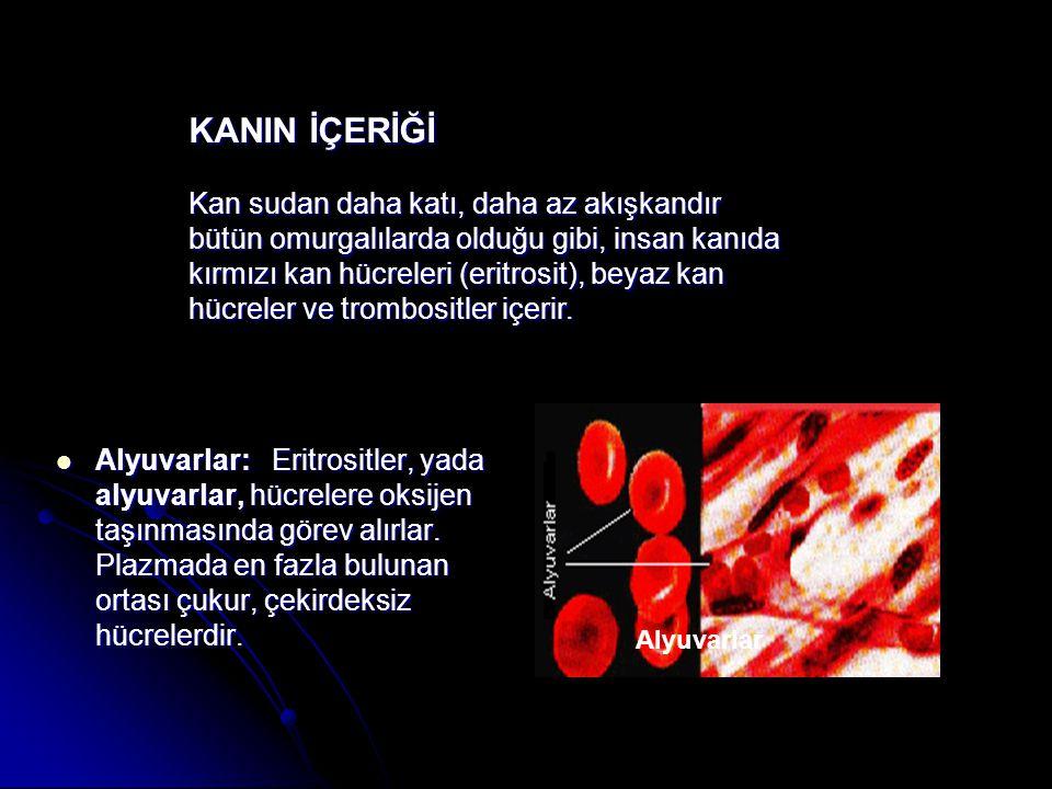 KANIN İÇERİĞİ Kan sudan daha katı, daha az akışkandır bütün omurgalılarda olduğu gibi, insan kanıda kırmızı kan hücreleri (eritrosit), beyaz kan hücreler ve trombositler içerir.