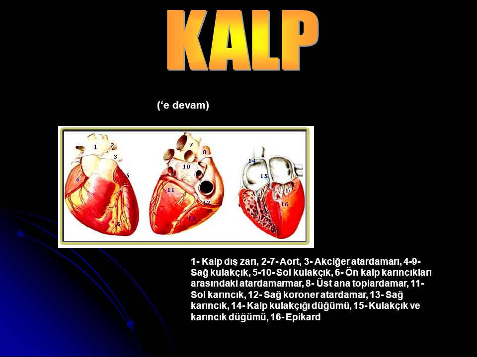 KALP ('e devam)