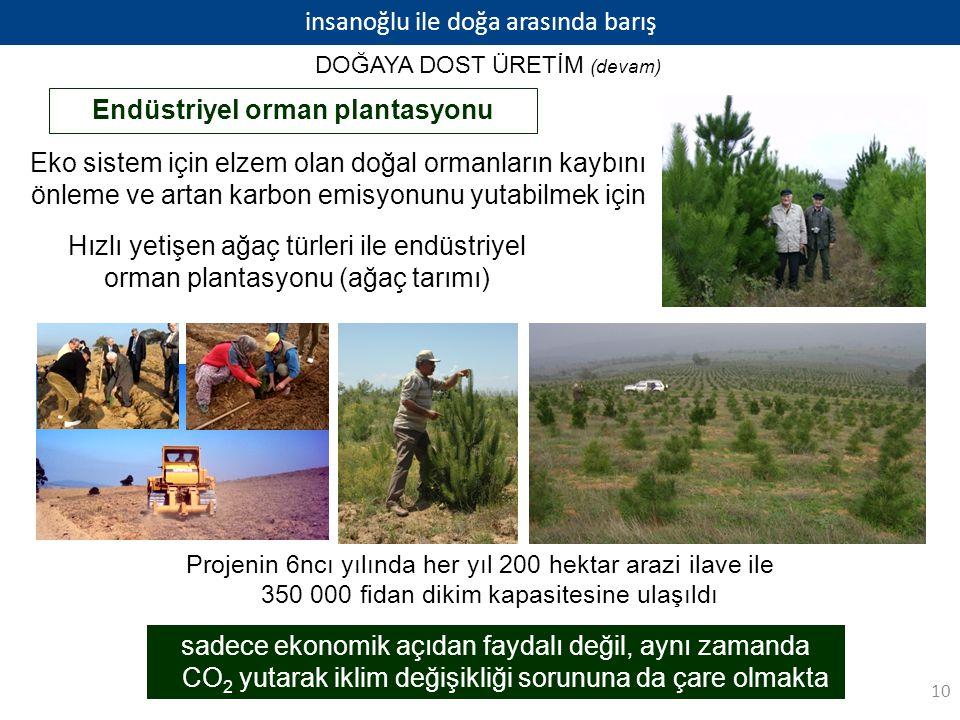 Endüstriyel orman plantasyonu