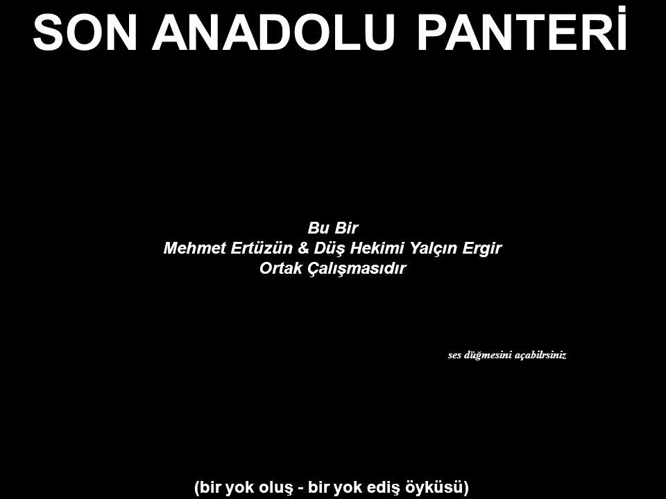 Mehmet Ertüzün & Düş Hekimi Yalçın Ergir