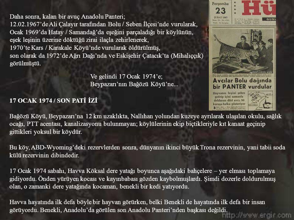 Daha sonra, kalan bir avuç Anadolu Panteri;