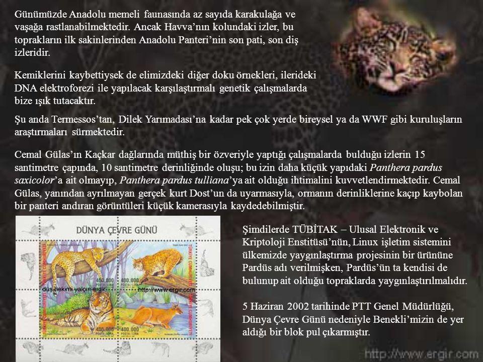 Günümüzde Anadolu memeli faunasında az sayıda karakulağa ve vaşağa rastlanabilmektedir. Ancak Havva'nın kolundaki izler, bu toprakların ilk sakinlerinden Anadolu Panteri'nin son pati, son diş izleridir.