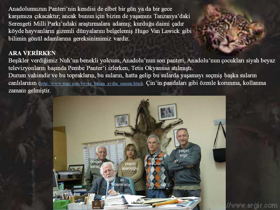Anadolumuzun Panteri'nin kendisi de elbet bir gün ya da bir gece karşımıza çıkacaktır; ancak bunun için bizim de yaşamını Tanzanya'daki Serengeti Milli Parkı'ndaki araştırmalara adamış; kurduğu daimi çadır köyde hayvanların gizemli dünyalarını belgelemiş Hugo Van Lawick gibi bilimin gönül adamlarına gereksinimimiz vardır.