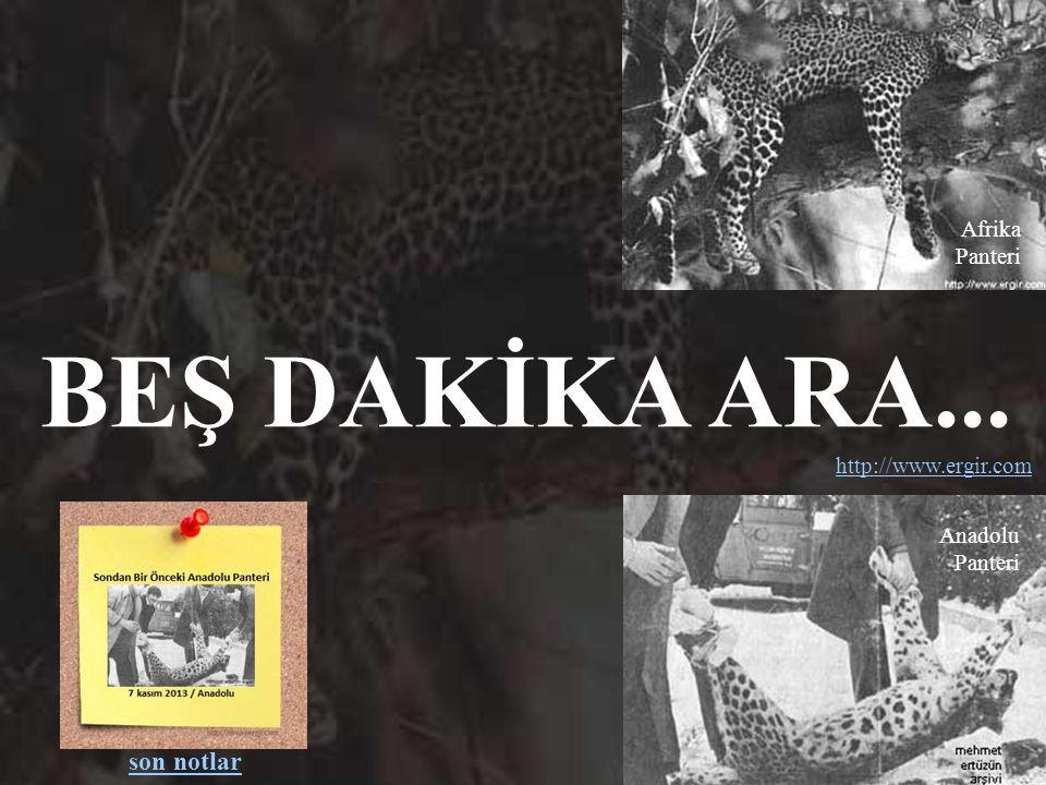 BEŞ DAKİKA ARA... son notlar Afrika Panteri http://www.ergir.com