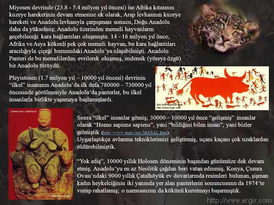 Miyosen devrinde (23.8 - 5.4 milyon yıl öncesi) ise Afrika kıtasının kuzeye hareketinin devam etmesine ek olarak, Arap levhasının kuzeye hareketi ve Anadolu levhasıyla çarpışması sonucu, Doğu Anadolu daha da yükselmiş; Anadolu üzerinden memeli hayvanların geçebileceği kara bağlantıları oluşmuştu. 14 - 16 milyon yıl önce, Afrika ve Asya kökenli pek çok memeli hayvan, bu kara bağlantıları aracılığıyla çiçeği burnundaki Anadolu'ya ulaşabilmişti. Anadolu Panteri de bu memelilerden evrilerek oluşmuş, endemik (yöreye özgü) bir Anadolu türüydü.