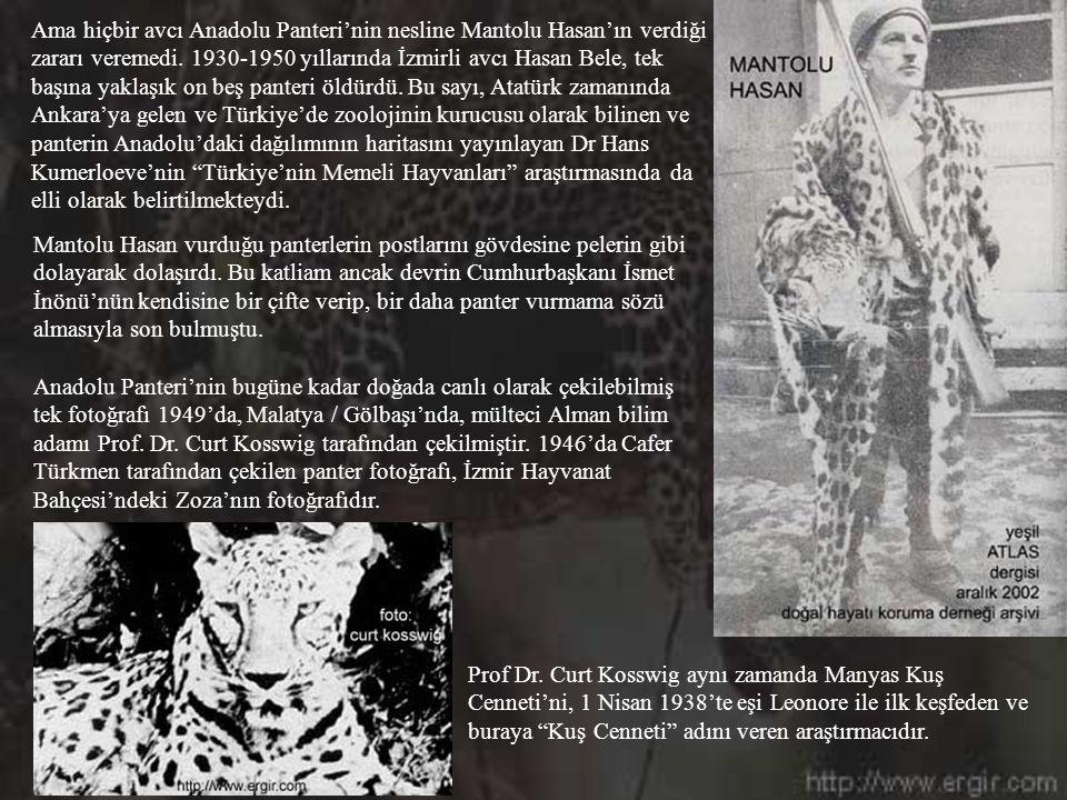 Ama hiçbir avcı Anadolu Panteri'nin nesline Mantolu Hasan'ın verdiği zararı veremedi. 1930-1950 yıllarında İzmirli avcı Hasan Bele, tek başına yaklaşık on beş panteri öldürdü. Bu sayı, Atatürk zamanında Ankara'ya gelen ve Türkiye'de zoolojinin kurucusu olarak bilinen ve panterin Anadolu'daki dağılımının haritasını yayınlayan Dr Hans Kumerloeve'nin Türkiye'nin Memeli Hayvanları araştırmasında da elli olarak belirtilmekteydi.