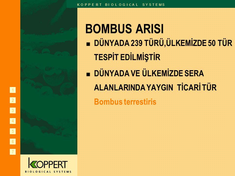 BOMBUS ARISI DÜNYADA 239 TÜRÜ,ÜLKEMİZDE 50 TÜR TESPİT EDİLMİŞTİR