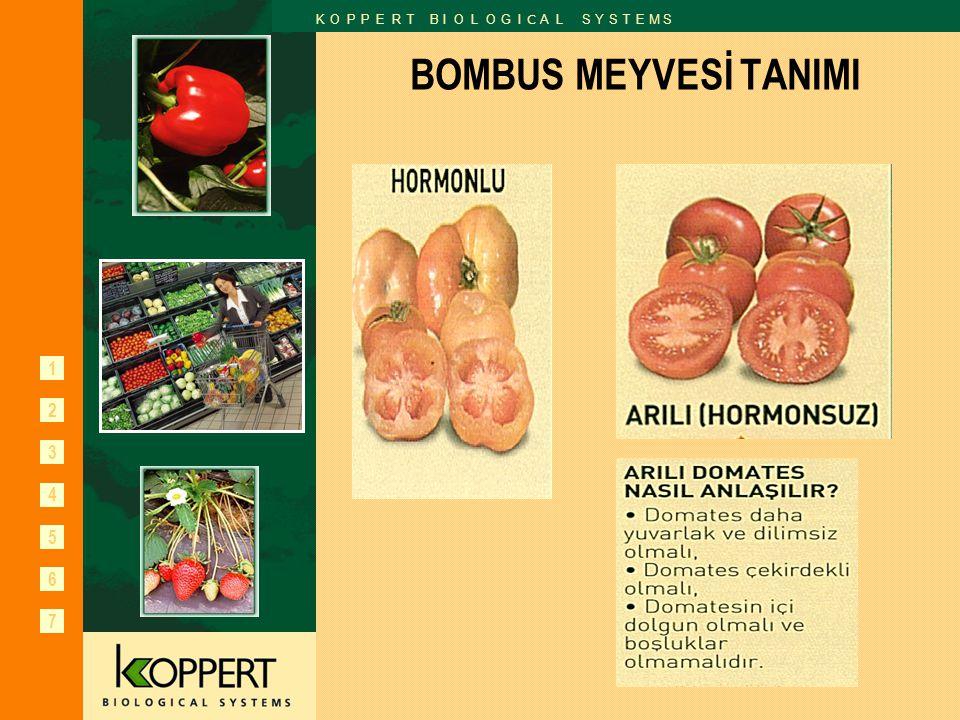 BOMBUS MEYVESİ TANIMI
