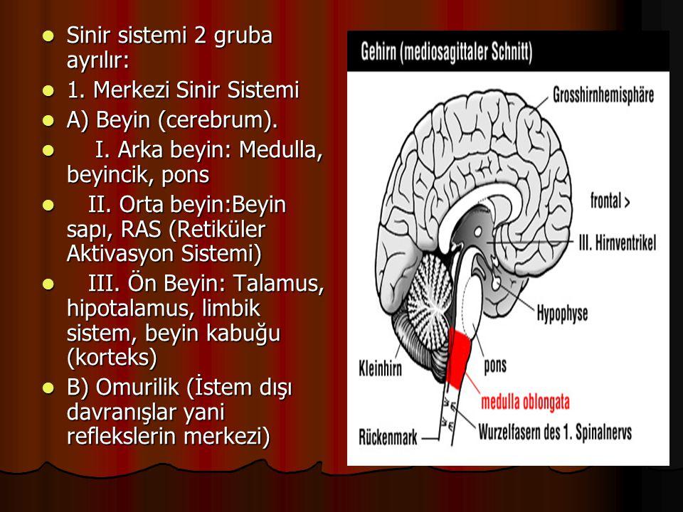 Sinir sistemi 2 gruba ayrılır: