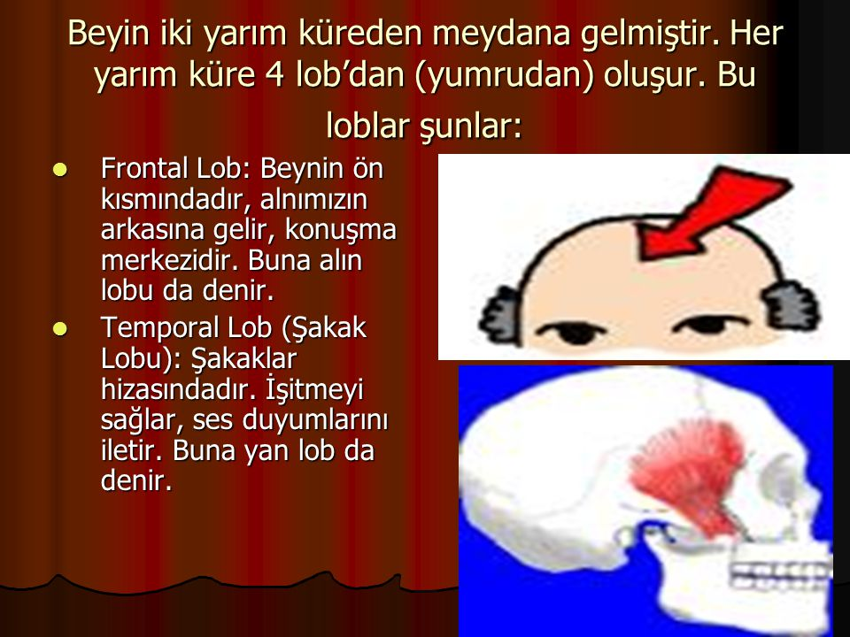 Beyin iki yarım küreden meydana gelmiştir